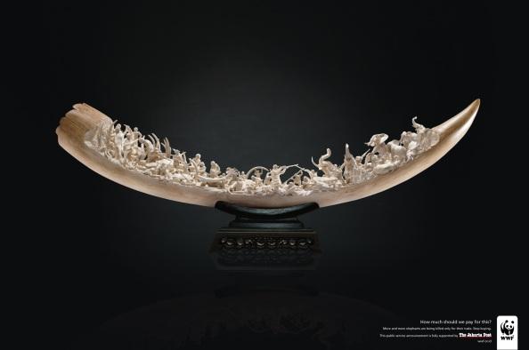 WWF : Ivory (zoomer pour voir les détails, c'est impressionnant)